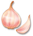 Garlic can be grown successfully in BC